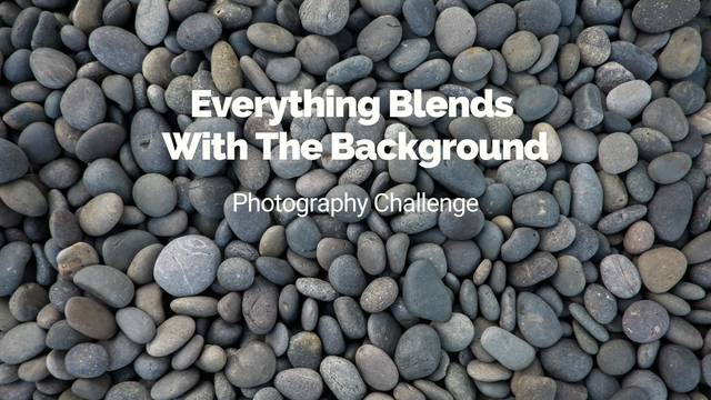 "featured image thumbnail for post ""Everything blends with the background"" - Photography Challenge"